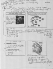 cells of the immune system notes