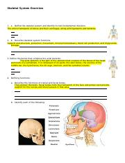 Skeletal System Critical Thinking Qs