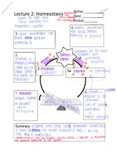 Printables Homeostasis Worksheet homeostasis worksheet