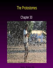 AP Ch. 30--The Protostomes