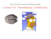 Neurobiology of Motivation (Lecture 15)
