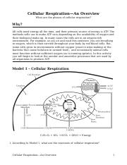 POGIL Cellular Respiration-An Overview-S.pdf - Daisy ...