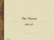 The_Thorax