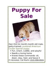 Lab 1-1 Puppy for Sale Flyer.