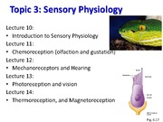 BIO 3303 Lecture 10 Intro to Sensory 2015 Notes