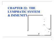 HW_A&P 2640_lecture_ch22-