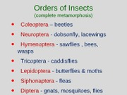 Ent1000_Insectorders_holomet_gray_notes