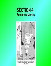 section #4 -- female reproduction