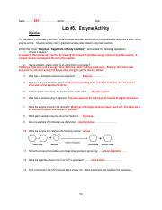Lab5_Enzyme lab key.pdf