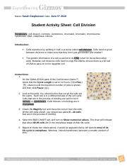 CellDivision UPDATED Activity Sheet 2017.doc