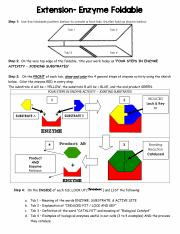 extension-_enzyme_foldable.pdf