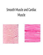 Smooth Muscle and Cardiac Muscle notes.pptx