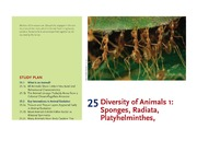 CHAPTER 25 ANIMAL DIVERSITY 1(1)