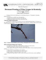 GEN 300 Intro to Viticulture Dormant Pruning