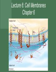 Chapter 6 - Cell Membranes.pdf