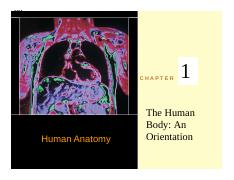 Chapter 1 (The Human Body- An Orientation)