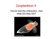 Lecture8ZooplanktonII