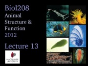 2012 Lecture 13 (Echino) UPLOAD