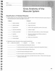 Gross Anatomy of the Muscular System.pdf - REVIEW SHEET ...