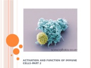 15 Activation and function of T and B cells-2