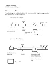105 Operon worksheet Key - Lac Operon Worksheet BSCI105: Principles of