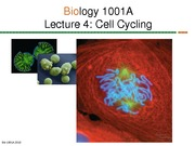 Lec 04 Cell Cycling