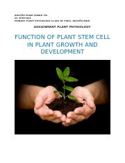 Function of plant stem cell in plant growth and development