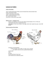 Lecture 16, Poultry