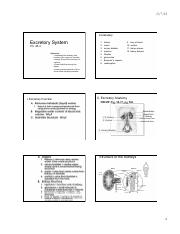 Ch__38-3_Excretory_System_notes_only