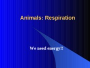 Chapter42 Animals Respiration