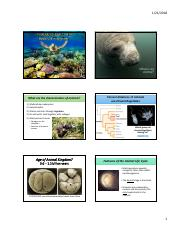 6b- NOTES Intro to Animals (Ch 30).pdf