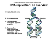 BSCI DNA Replication