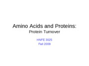34 AAs - Protein Turnover-1