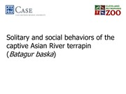 Solitary and Social Behaviors of Captive Asian River Terrapin - Student Presentation Assignment