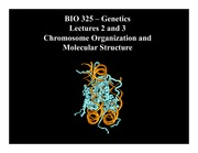 Lesson 2-3 Chromosome Organization and Molecular Structure