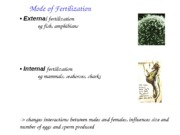 BISC 104 Animal Reproduction