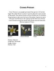 Weeds & Grasses Identification.docx
