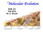 04 Ribosomes - In vitro Evolution Fall 15_2