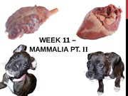 Week 11 PPT (Mammalia II)