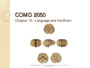 Chap_13-language_and_the_Brain