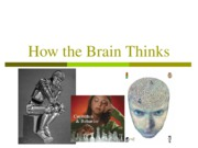13 How the Brain Thinks