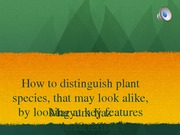 How to distinguish plant  species, that may look alike,  by looking at key features ppt