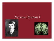Lecture 8- Nervous System