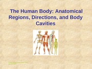 anatomy chapter 1 anatomical regions (chapter 1)