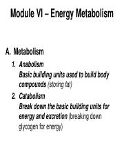 Chapter 6 - Energy Metabolism(1).pdf