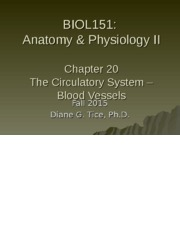 Chapter 20 - The Circulatory System - Blood Vessels (1).ppt