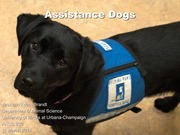 11March2014-Service_dogs