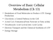 Chpt. 13 overview of basic cellular metabolism