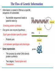 Chapter 17 - Gene expression(2).pptx