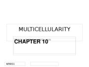 Chapter 10 - Multicellularity